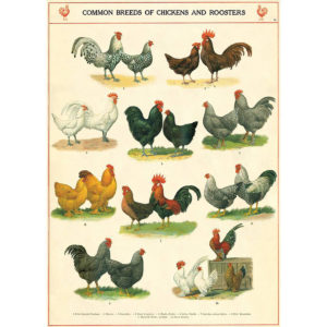 Cavallini Poster Wrap - Chickens and Roosters