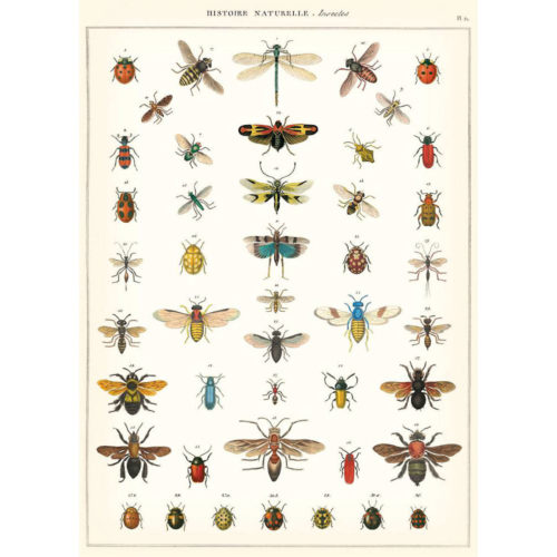 Cavallini Wrap - Natural History Insects