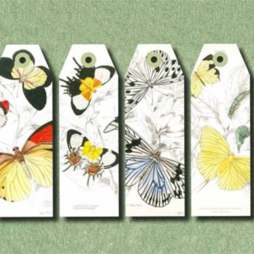 Paper Craft Book - Natural History