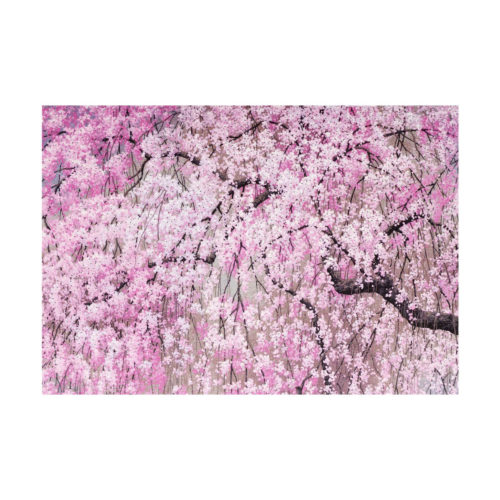 Peter Pauper Press Boxed Everyday Note Cards - Cherry Blossoms